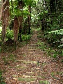 Waitaanga South Road To Te Rerepahupahu Falls - North Island - New Zealand