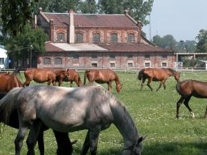 Walewice - Antiguo Palacio y Stud Horse