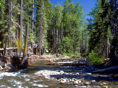 Ward Creek Near Tahoe City