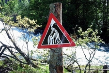 Warning Sign At Geiranger