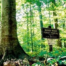 Warren Woods State Park