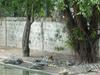 Wasan Crocodile Farm