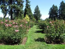 Washington Park Flowers