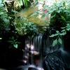 Water-Body Inside Park