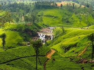 Srilanka - Misty Hills 10 Days 09 Nights Fotos