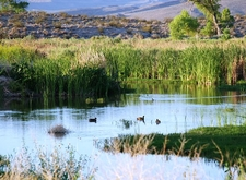 Waterfowl In The Refuge
