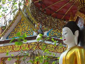 3-Night Chiang Mai Tour: Mountain Bike, Wat Doi Suthep and Whitewater Rafting Photos