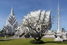 Wat Rong Khun Tree