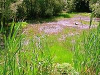 Weingraben Natural Monument