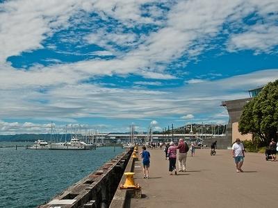 Wellington Harbour View NZ