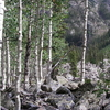 Weminuche Wilderness Aspen 2 0 1 0