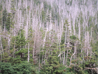 West Chichagof-Yakobi Wilderness