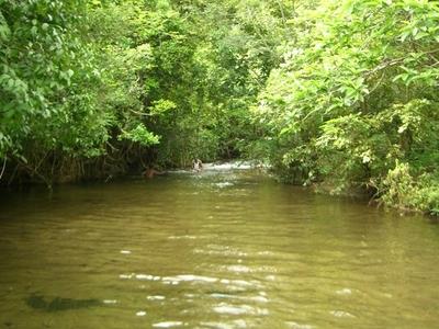Western Ghats Stream