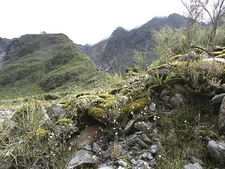 @ Westland Tai Poutini National Park NZ