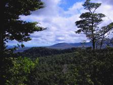 Whakapapaiti Hut To Whakapapa Village Trail - Tongariro National Park - New Zealand