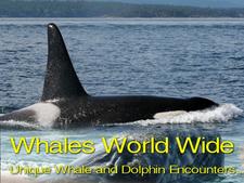 Whales Worldwide