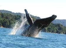 Whale Views 01