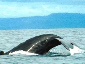 Whale Views 02