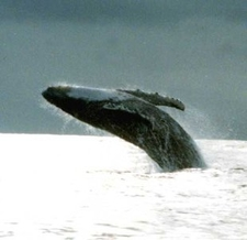 Whale Views 03