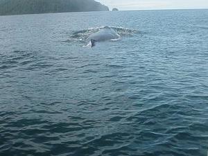 Whale Views 04