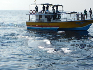 Galle Tour With Whale Watching Fotos