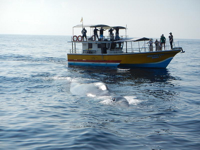 Galle Tour With Whale Watching Photos