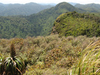 Whareorino Hunting Area - North Island - New Zealand