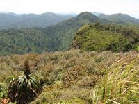 Whareorino Hunting Area