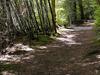 Whatapo Bay Walk - Te Urewera National Park - New Zealand