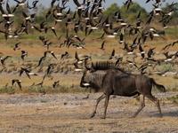 Akagera National Park Tour