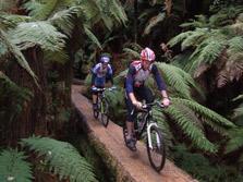 Whirinaki Forest Mountain Bike Track