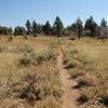 Wildcat Trailhead Open Expanse - Zion - Utah - USA