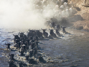 5 Days Wildebeest Migration Tour Serengeti Photos