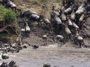 Kenya Migration Safaris