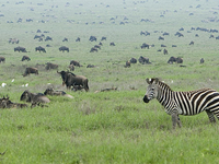 Tanzânia Norte Circuito Safari 7 dias