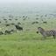 Tanzania North Circuit Safari 7 Days