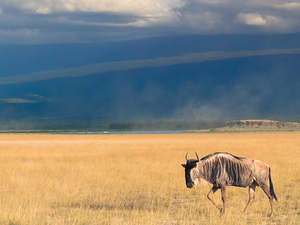 3 Days / 2 Night Safari To Amboseli National Park Fotos