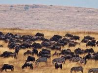 Tanzania Wildebeests Migration Safari July/Sept 2019