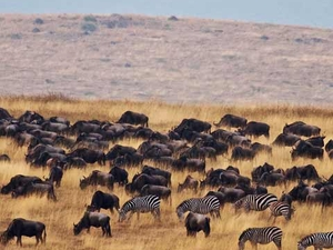 Tanzania Wildebeests Migration Safari July/Sept 2019 Photos