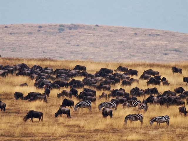 Tanzania Wildebeests Migration Safari July/Sept 2019 Photos