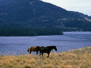 Wild Horse Island