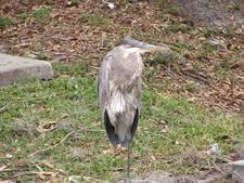 Wildlife Bird