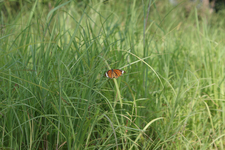 Wildlife Kanha National Park
