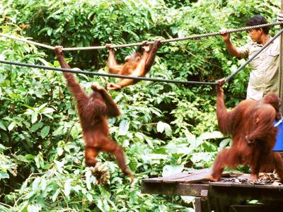 Wild Men Of Borneo