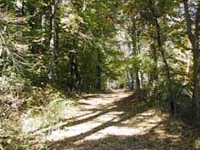 Willowdale State Forest