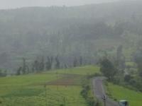 Wilson Hills