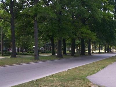 Wilson  Park
