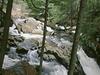 Windsor State Forest
