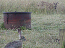 Woodland Creatures At Manchester Beach Park