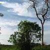 Woody Plants In The Maduru Oya National Park
